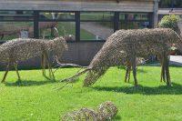 Ipswich High School Year 8 pupils' willow animal sculptures